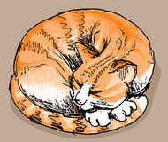 Sleeping red cat Stock Images
