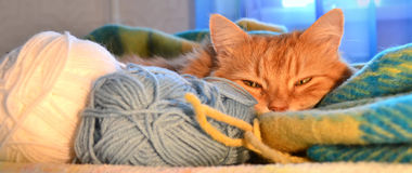 Sleeping red cat Royalty Free Stock Photography