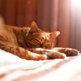 Sleeping red cat. The red cat is lying. Sunlight in the window. Calm, silence, peace Royalty Free Stock Images