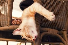 Sleeping red cat on a wicker chair Stock Photos