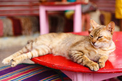 Sleeping redhead cat Royalty Free Stock Image