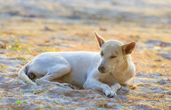Sleeping relaxed dog on the beach sand Royalty Free Stock Photography