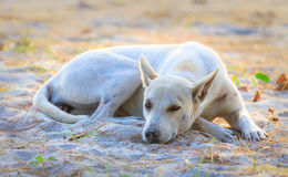 Sleeping relaxed dog on the beach sand Stock Images