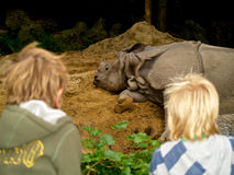 Sleeping rhino in zoo Royalty Free Stock Photography