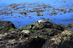 Sleeping on the rocks Stock Image