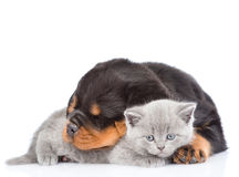 Sleeping rottweiler puppy embracing cute kitten. Isolated on white Stock Photography
