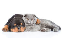 Sleeping rottweiler puppy hugging cute kitten. Isolated on white.  Royalty Free Stock Image