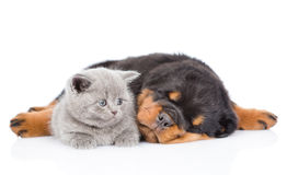 Sleeping rottweiler puppy hugging small kitten. Isolated on whit. E background Royalty Free Stock Photos