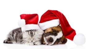 Sleeping scottish kitten and puppy with santa hats.  Stock Photography