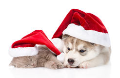 Sleeping scottish kitten and Siberian Husky puppy with santa hat. isolated Royalty Free Stock Photos
