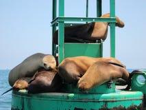 Sleeping sea lions Royalty Free Stock Photos