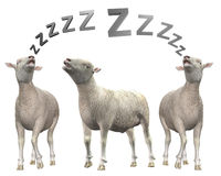 Sleeping sheep or lamb illustration Royalty Free Stock Images