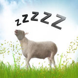 Sleeping Sheep Or Lamb Illustration Royalty Free Stock Image