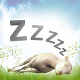 Sleeping Sheep Or Lamb Illustration Royalty Free Stock Photography