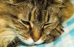 The cat is sleeping royalty free stock photography