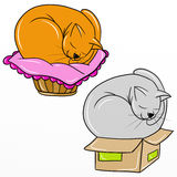 Sleeping in small boxes Stock Photos