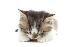 Sleeping small fluffy kitten  on white background close- Royalty Free Stock Images