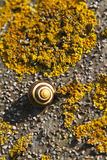 Sleeping snail Stock Photography