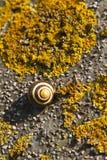 Sleeping snail Stock Photography