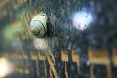 Sleeping snail. Striped snail on the grave stone Royalty Free Stock Photo