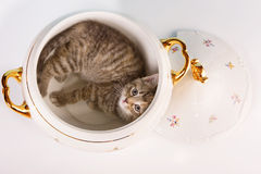 Sleeping in a soup tureen Royalty Free Stock Images