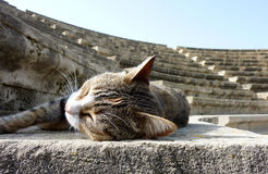 Sleeping Stray Cat Enjoying the Sun in a Amphitheatre Royalty Free Stock Images