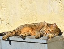 Sleeping stray cat on the steps. Stock Images