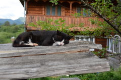 Cute cat sleeping. Sleeping stray cat in the yard of a monastery, in Maramures, Romania Stock Photos