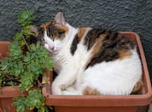 Sleeping tabby cat in the garden Stock Images