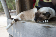 Sleeping thai cat. On wooden terrace Stock Photography