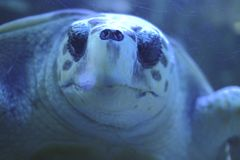 a sleeping turtle in a fish tank stock images