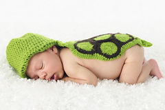 Sleeping Turtle Newborn Royalty Free Stock Image