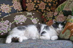 Sleeping tuxedo cat. Black and white cat surrounded by pillows Stock Photo