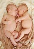 Sleeping twins Stock Photos