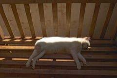 Sleeping white cat in animal shelter at Nairobi, Kenya, Africa Stock Photos