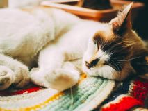 Cat sleeps. Sleeping white cat on a colorful mat - perfect dream royalty free stock photo