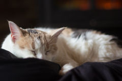 Sleeping White Cat in front of Fireplace Stock Image