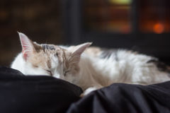 Sleeping White Cat in front of Fireplace Royalty Free Stock Images