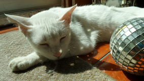 Sleeping white cat and the sparkling wishing crystal Royalty Free Stock Photo