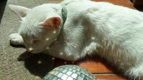 Sleeping white cat and the sparkling wishing crystal Royalty Free Stock Images