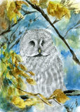 Sleeping white owl. Pencil, watercolor, paper. Sleeping white owl on the blue sky background and yellow leafs stock illustration
