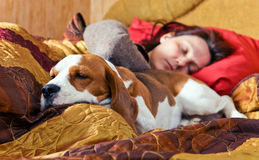 The sleeping woman and its dog Stock Images