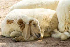 Sleeping. Stock Photography