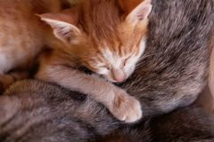 Sleeping young cat Royalty Free Stock Photos