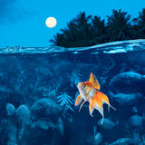 Sleepless night for a little fish at Amazon river. Beautiful tropical night with full moon small golden carp surrounded by angry piranhas cannot sleep royalty free stock photo