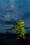Sleepless in silence. Larch lighted flashlight and a starry sky Stock Photos