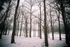 Sleepping forest Stock Photography