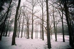 sleepping skog Arkivbild