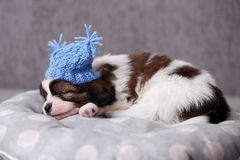 sleeps in a hat Stock Photography