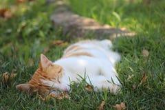 sleepy foto de stock